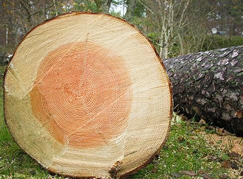 木材与含水率研究